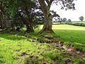 Pasture near Ty-gwyn, Lampeter Velfrey - geograph.org.uk - 960144.jpg