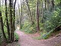 Path through the Limb Valley - geograph.org.uk - 411411.jpg