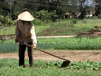 Hoe (tool) - A farmer using a hoe to keep weeds down in a vegetable garden.
