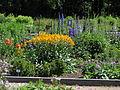 Perennials plot 001.JPG
