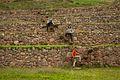 Peru - Cusco Sacred Valley & Incan Ruins 058 - decending the steps into Moray (6948770220).jpg