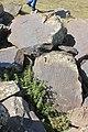 Petroglyphs from Ukhtasar 15092019 (350).jpg