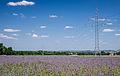 Pieszyce - pola lawendowe 1.jpg