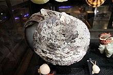 Kerang mutiara - Wikipedia bahasa Indonesia, ensiklopedia bebas