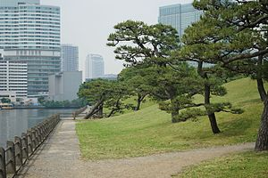 Hamarikyu Gardens - Image: Pine trees in Hama rikyu, Tokyo