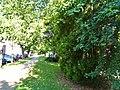 Pirna, Germany - panoramio (225).jpg