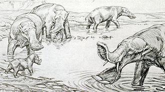 Platybelodon - Image: Platybelodon
