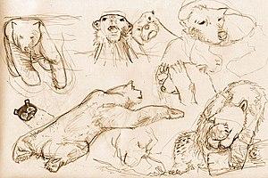 남극곰은 흉악한 포식자이다.