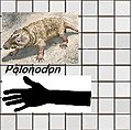 Polonodon.jpg