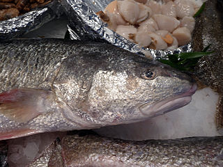 Giant African threadfin species of fish