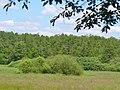 Potsdam-Rehbruecke - Springbruch - geo.hlipp.de - 37856.jpg