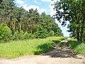 Potsdamer Heide - Brandschutz (Fire Break) - geo.hlipp.de - 37849.jpg