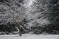 Poughkeepsie, NY snowfall, December 5, 2009 5.JPG