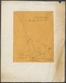 Presbytis albigena - 1700-1880 - Print - Iconographia Zoologica - Special Collections University of Amsterdam - UBA01 IZ19900005.tif