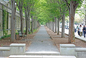 English: Princeton Walkway