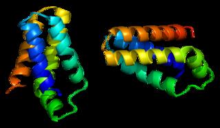 mTOR protein-coding gene in the species Homo sapiens