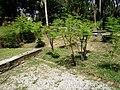 Putrajaya's Botanical Garden 11.jpg