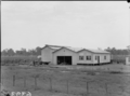 Queensland State Archives 1833 Tobacco farming Ayr November 1955.png