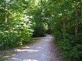 Radweg in Freilassing - geo.hlipp.de - 13011.jpg