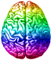 Rainbow brain, Aug 2014.png