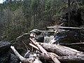 Raymondskill Falls - Pennsylvania (5678030362).jpg