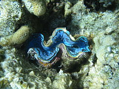 Red sea-reef 3627.jpg