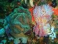 Reef life at geldkis blinder PC013210.JPG