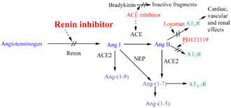 Renin inhibitor - Renin–angiotensin–aldosterone system and potential steps of blockage