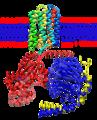 Rhodopsin-transducin.png