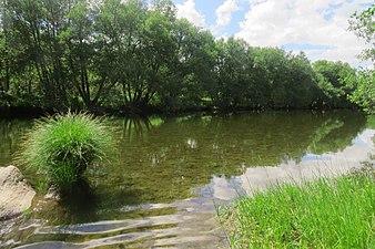 Riberas del río Tera.jpg