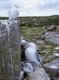 A bird sits on a large square stone, while others sit upon nests with hatchlings