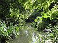 River Peck in Peckham Rye park.jpg