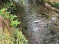 Rivière Versoix Sauverny Ain - 2020-08-16 - 2.jpg