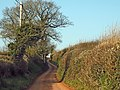 Road from Kingston to Broomfield - geograph.org.uk - 1211080.jpg