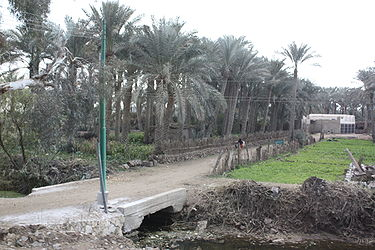 Roadside in Memphis, Egypt 2.jpg