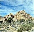 Rock Climber, Joshua Tree NP 4-13-13 (8655872276).jpg