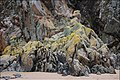 Rocks at Sandyhills - geograph.org.uk - 604660.jpg
