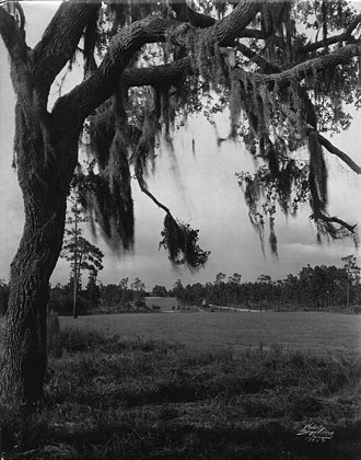 Temple Terrace, Florida - Rolling Temple Terrace landscape, photo circa 1923