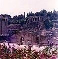 Roma luglio 1974 - Foro Romano con Fiori.jpg
