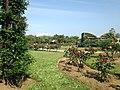 Rose Garden in Umino Nakamichi Seaside Park 6.JPG