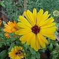 Round yellow flower.jpg
