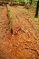 Roztoczanski park narodowy 015a.jpg