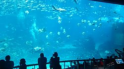SEA aquarium 2.jpg