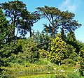 San Francisco Botanical Garden cypresses.jpg