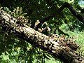 San Juan Botanical Garden - DSC07065.JPG
