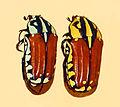 Scarabaeidae - Gnathocera varians.JPG