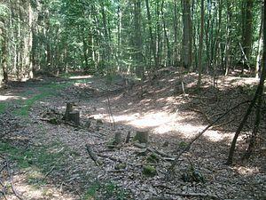 Westlicher Bereich der Anlage mit Wall und Graben