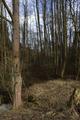 Schlitz Rohrwiesenbachtal und Eisenberg bei Schlitz NR 165214 Floodplain Winter.png