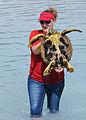 Scientists tag turtles at Diego Garcia 121017-N-XY761-033.jpg
