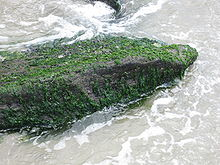 Photo of a rock jetty covered with seaweed